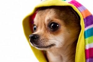 dog_in_hoodie