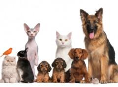 Pets-Stock-Photo
