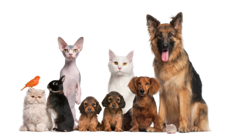 Pet Travel   International Dog and Cat Transport Information