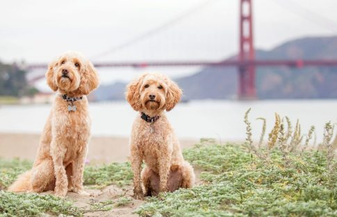 pets in san francisco