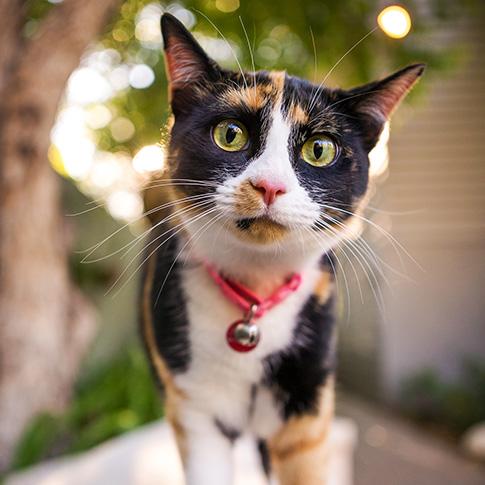 Cat Transport Services - Pet Express