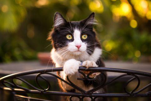 cat transport services