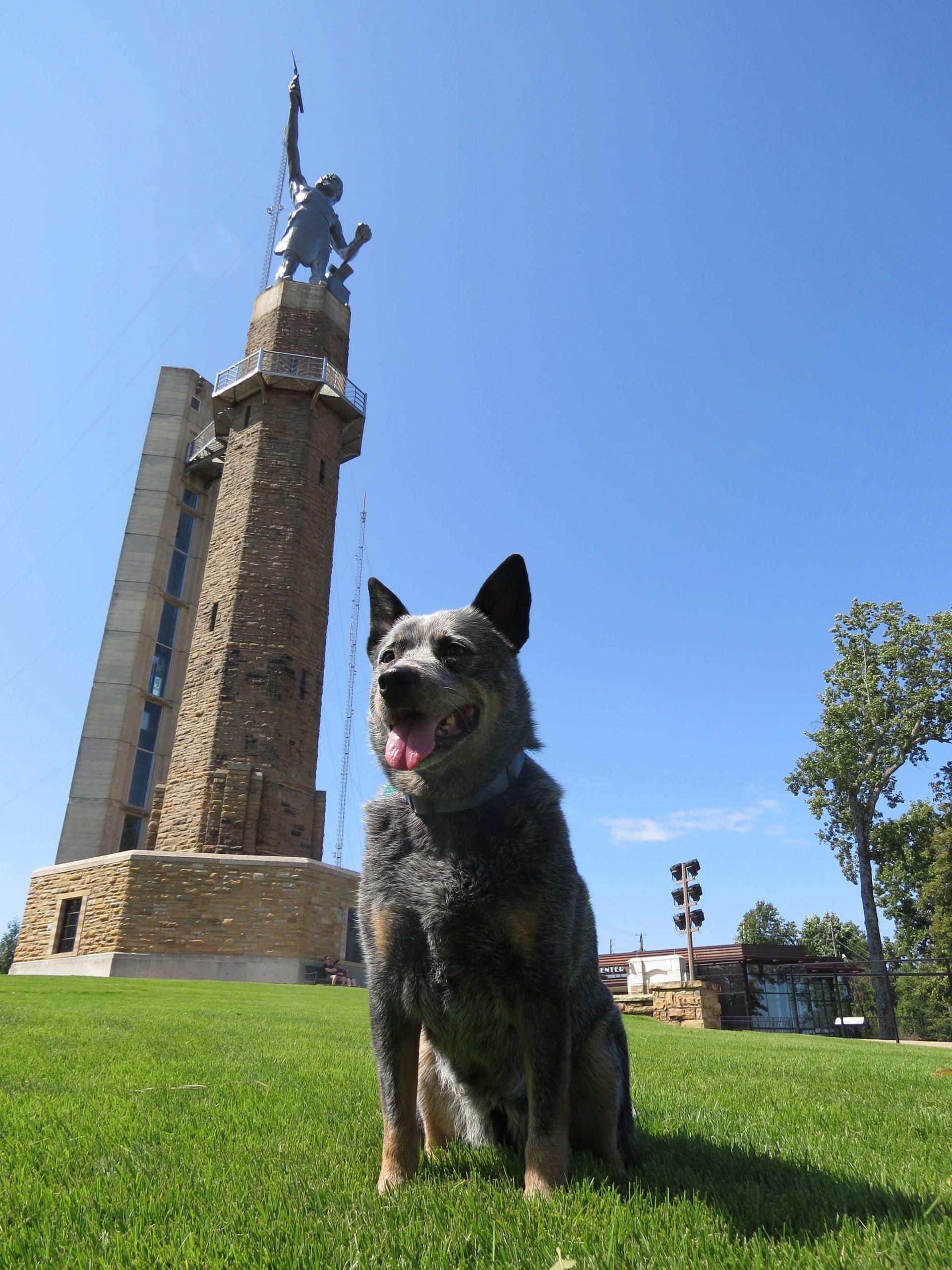 Tango the Australian Cattle Dog