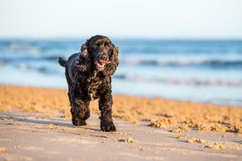 pooch on a beach